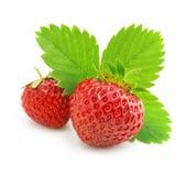 Fruits rouges de fraise avec les lames vertes d'isolement photographie stock libre de droits
