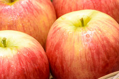 Fruits rouges de pomme Photo stock