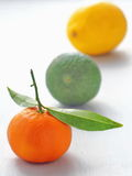 Fruits in a row on a white background. Three pieces of fruit in a row on a white background. Selective focus on the front Royalty Free Stock Image