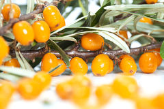 Fruits of sea-buckthorn closeup Royalty Free Stock Photography
