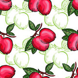 Fruits seamless pattern Stock Photography