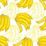 Fruits seamless pattern Stock Image