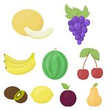 Fruits set icons in cartoon style. Big collection of fruits vector symbol stock illustration Stock Photo