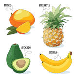Fruits. Set of 4 vector exotic fruits illustrations royalty free illustration