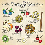 Fruits and Spices. Drawings set for different usage Royalty Free Stock Images