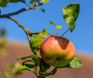 Fruits of summer Royalty Free Stock Photography