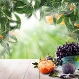 Fruits on tangerin`s tree in green sunlight garden. Natural morning background.  stock illustration