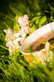 Fruits tea cup and blooming apple flower Royalty Free Stock Image