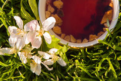 Fruits tea cup and blooming apple flower Royalty Free Stock Photo