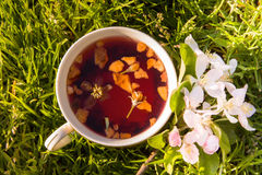 Fruits tea cup and blooming apple flower Stock Photography