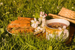 Fruits tea cup and blooming apple flower on green grass backgrou Stock Image
