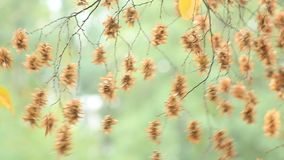Fruits on tree in wind stock footage