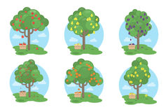 Fruits trees set. Royalty Free Stock Images