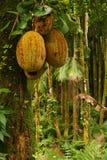 Fruits tropicaux Image libre de droits