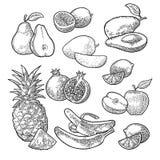 Fruits tropicaux figés Ananas, chaux, banane, grenade, maracuya, avocat Photos stock