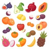 Fruits vector fruity apple banana and exotic papaya with fresh slices of tropical dragonfruit or juicy orange. Fruits set vector fruity apple banana and exotic Stock Photos