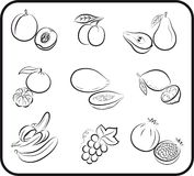 Fruits vector hand drawn Stock Photography