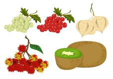 Fruits Vector Royalty Free Stock Images