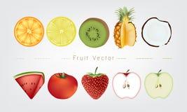Fruits vector illustration; orange lemon kiwi pineapple coconut watermelon tomato strawberry apple Stock Photo