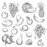 Fruits vector sketch isolated icons Royalty Free Stock Photo