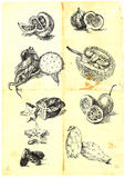 Fruits and vegetables. Hand drawn a large collection of seasonal fruits and vegetables from around the world. Detailed and precise work. (For similar images royalty free illustration