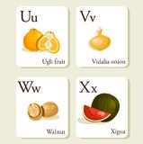 Fruits and vegetables  alphabet cards. Illustration, part 6of 7 Stock Images