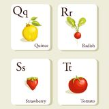Fruits and vegetables  alphabet cards. Illustration, part 5of 7 Stock Photography