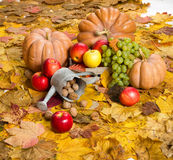 Fruits and vegetables on autumn leaves Stock Photography