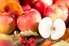 Fruits and vegetables in autumn Stock Image