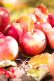 Fruits and vegetables in autumn Royalty Free Stock Image