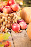 Fruits and vegetables in autumn Stock Photos