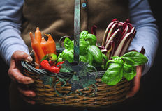 Fruits and vegetables in basket. Vegetables and fresh fruit, grown and harvested in the countryside in a basket Stock Images