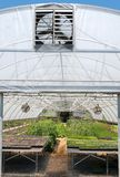 A vegetable garden greenhouse. Fruits and vegetables getting started in a greenhouse stock photos