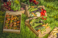 Fruits and vegetables on a green market Royalty Free Stock Image