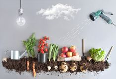 Organic fruit and vegtable garden concept Stock Images
