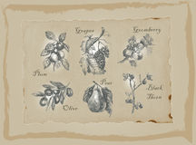 Fruits and Vegetables - An hand drawn pack. Freehand drawing. Royalty Free Stock Photo