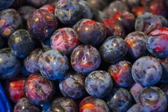 Plumcots on stand royalty free stock photo