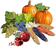 Fruits and vegetables for Thanksgiving. Illustration of autumn fruits and vegetables Royalty Free Stock Photography