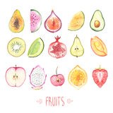 Fruits. Watercolor illustration with the fruits royalty free illustration