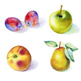 Fruits watercolor set - plums, apple, pear, peach Stock Image
