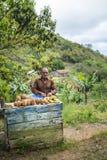 Fruitseller local no lado da estrada, Cuba fotografia de stock