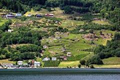 Fruittuinen op kusten van de Hardanger-fjord, Noorwegen royalty-vrije stock fotografie