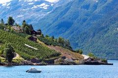 Fruittuinen op kusten van de Hardanger-fjord, Noorwegen royalty-vrije stock foto's