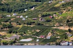Fruittuinen op kusten van de Hardanger-fjord, Noorwegen stock foto's
