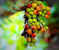 Fruity κινηματογράφηση σε πρώτο πλάνο δέντρων φύσης στοκ φωτογραφία