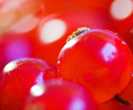 Fruity background. Red currant supermacro stock image