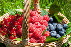 Fruity basket. Wicker basket full of fresh summer fruits Royalty Free Stock Image
