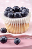 Fruity cupcake with blueberries Stock Photography