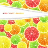 Fruity slices citrus background Royalty Free Stock Image