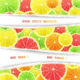 Fruity slices citrus background Royalty Free Stock Images
